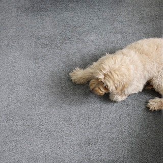 Engineered Floors ShowStopper Carpet
